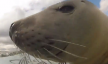 Baby Seal Can't Surf for Sh*t, but It's Pretty Fun to Watch It Try (Video)