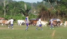 Cows Invade Soccer Pitch in Peru, But at Least They Didn't Take Any Selfies (Video)