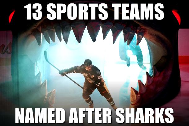shark week - sports teams named after shark