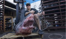 809-Pound Mako Shark Caught with a Bow and Arrow, Sets World Record (Pic)