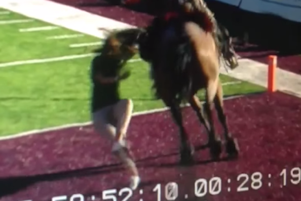 new mexico state horse knocks over student