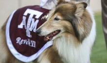 Cadet Saves Reveille VIII, the Texas A&M Collie, from Getting Trampled (GIF)