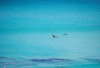 http://www.totalprosports.com/wp-content/uploads/2014/11/shark-stalking-a-surfer-1-520x344.png