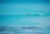 http://www.totalprosports.com/wp-content/uploads/2014/11/shark-stalking-a-surfer-2-520x345.png