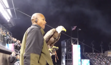 Another NFL Game, Another Eagle With a GoPro on Its Head (Video)