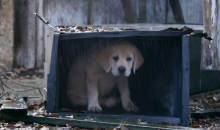Budweiser Rolls Out Another Puppy Love Commercial for the Super Bowl (Video)