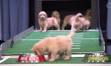 Puppies Predict the 2015 College Football Championship on Jimmy Fallon Show (Video)