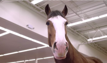 The Budweiser Clydesdales Return in This Super Bowl Ad (Video)