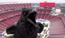 Raven Videobombs Webcam at NHL Stadium Series, Which Is Now Clearly Cursed (Video)