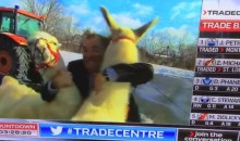 TSN TradeCentre: NHL Trade Deadline Coverage Includes Llama Chase (Video)