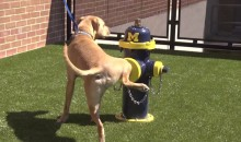 Ohio State Veterinary Paints Fire Hydrant in Michigan Colors (Video)