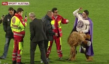 Austria Vienna Lion Mascot Shows Up Drunk For Work (Video)