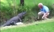 Old Man Tries to Take Golf Ball From Alligator, Pays the Price (Video)