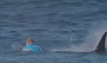 Pro Surfer Attacked By Shark During Competition on Live TV (Video)