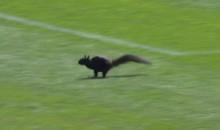 Squirrel Runs onto Comerica Park Field, Raises Hell (Video)