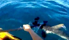 Insane Video: Kayak Fisherman Fights Off Ridiculously Aggressive Hammerhead with His Paddle (Video)