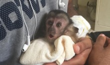 Dez Bryant's Pet Monkey Being Investigated By PETA