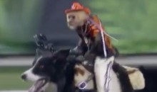 Monkeys Riding Dogs Is The Best MNF Highlight (Video)