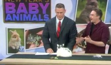 John Cena Went on 'Today' to Play with Baby Animals (Video)