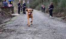 Dog Accidentally Runs Half Marathon, Finishes 7th, Wins Medal (Pics)