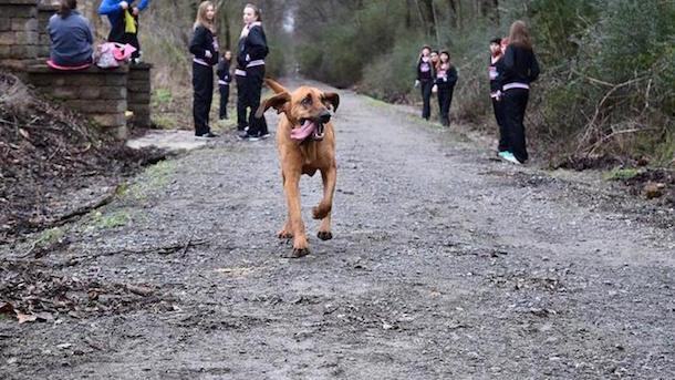 dog accidnetally runs half marathon wins 7th place 2