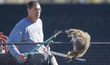 Raccoon Terrorizes Yankees Spring Training, Falls from Top of Backstop, Survives (Pics + GIF)