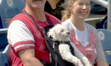 This Dog in a Baby Carrier at Phillies Game Is Chill AF (Video)