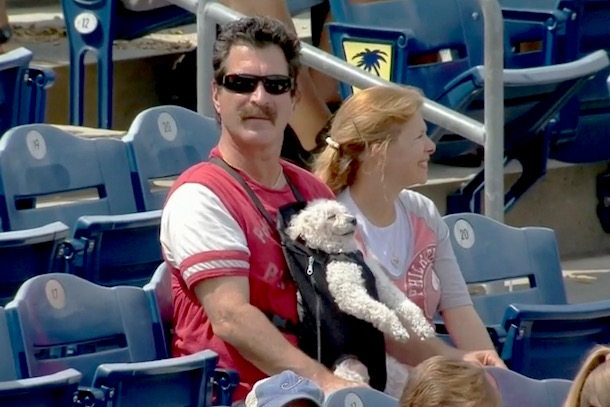 dog in a baby carrier at phillies game