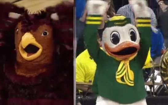 duck hawk