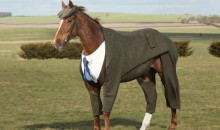Look at This Dandy Race Horse Wearing a Three-Piece Suit for Some Reason (Pic)