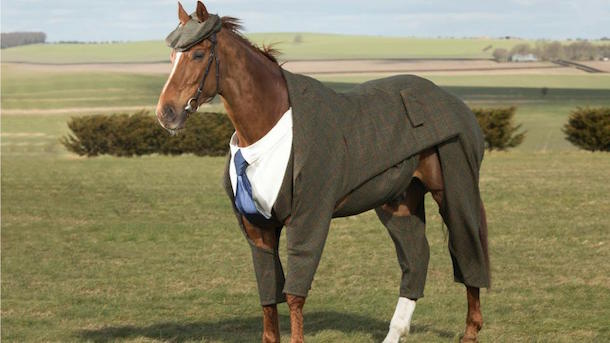 harris-tweed-three-piece-suit-horse-cheltenham-lead horse wearing a three-piece suit