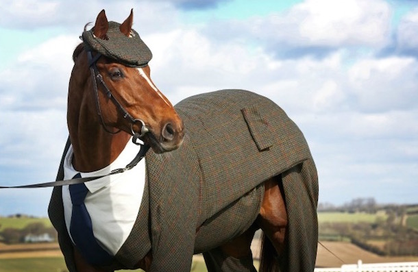 horse wearing a three-piece suit