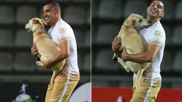 Dog Interrupts Copa Libertadores Game deportivo tachira UNAM