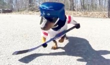 Wiener Dogs Playing Hockey Is Why They Invented the Internet (Video)