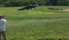 Here's the Biggest Alligator You'll Ever See…On a Florida Golf Course (Video)