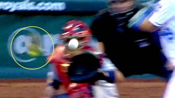 adam wainwright almost hits bird with pitch