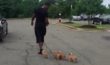 Redskins CB Bashaud Breeland Brings His Cute Puppies to Training Camp (Video)