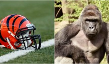 Fan Launches Petition to Change The Bengals' name to The 'Cincinnati Harambes'