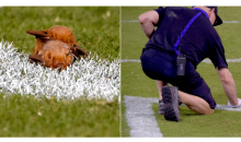 Two Bats Had Sex In The End Zone During The Lions-Ravens Preseason Game