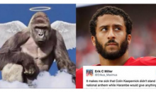Social Media Wants To Sacrifice Colin Kaepernick In Exchange For Bringing Harambe Back