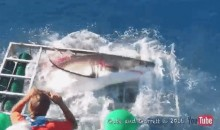 'Cage Breach' Leaves Diver Confined with a Giant, Angry Great White Shark (Video)