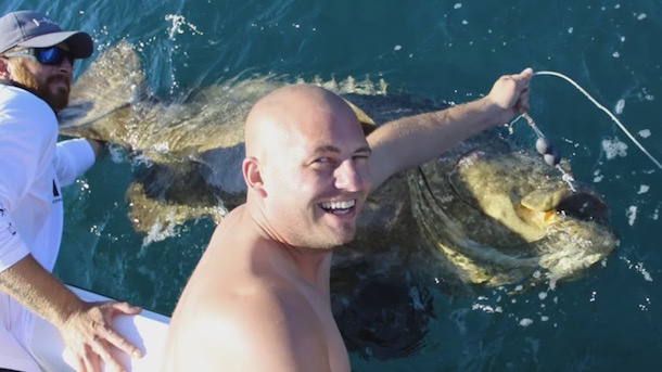 500-pound-goliath-grouper-pulls-fisherman-into-water