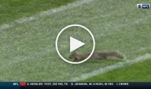 Squirrel Runs Across The Field During Packers/Colts Game