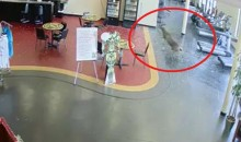 Deer Busts Through Window of Gym, Runs Around, Then Hightails It Out (Video)