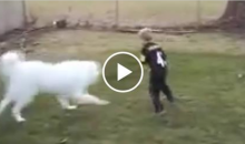 NFL VP of Officiating Weighs In on Kid's Backyard Catch and Dog's Tackle (Video + Tweet)
