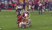FSU's Mascot Renegade Falls to the Ground During Pregame (Video)