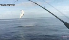 Watch These Dudes Go Crazy Trying to Reel in a Mako Shark (Video)
