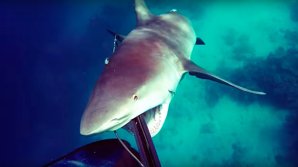 spearfisher-fends-off-bull-shark-attack
