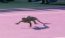 Tennis-Loving Iguana Just Strolls Onto Court at Miami Open, Like a Boss   (Video)