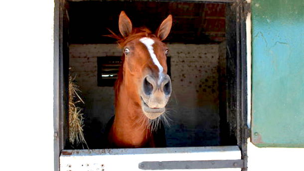 president trump horse gelded snaith racing